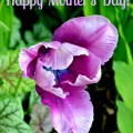 Happy's Mother's Day - A thank you to my Mom at littlemisscelebration.com