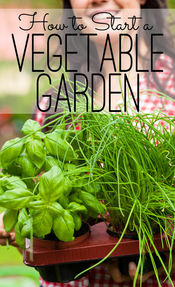 How To Start A Vegetable Garden from The Seasoned Homemaker